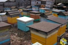 Апрель, 2013 года. Выставление пчел