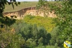 Донник на склоне берега реки Чулым