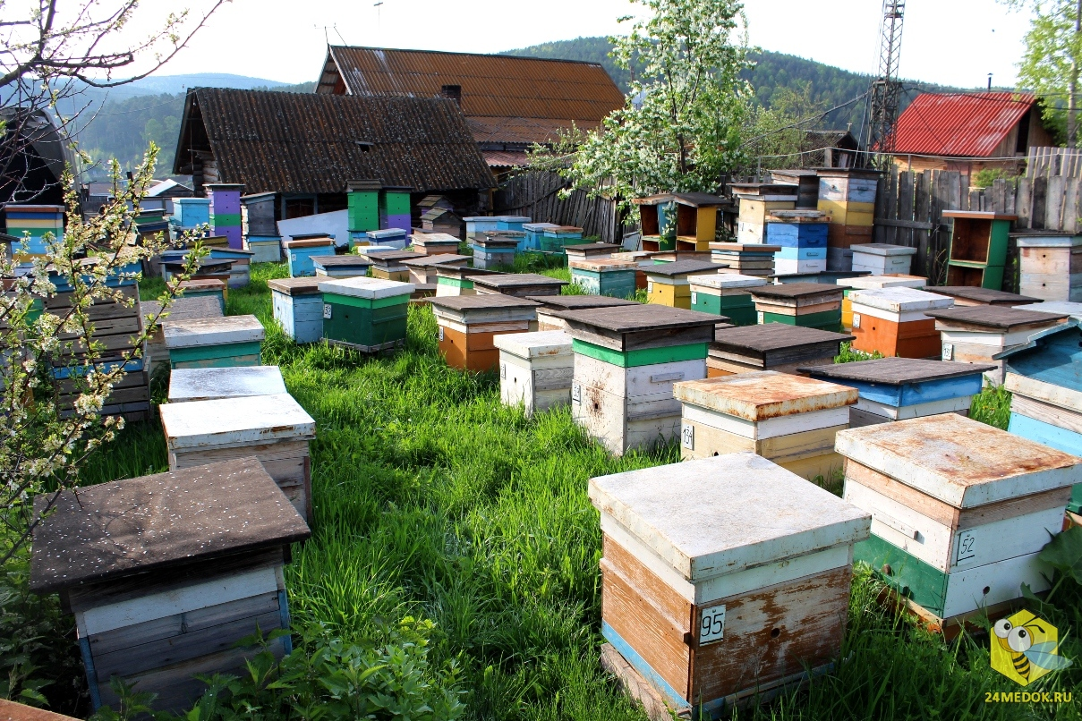 Пчёлы на стационаре, 2013 год