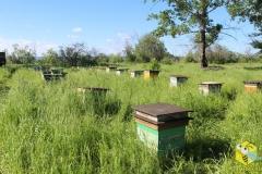 В ночь с 22 на 23 июня вывезли последнюю машину пчел