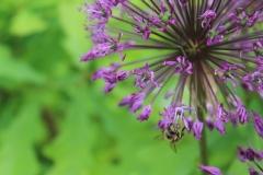 Пчела на декоративном луке