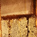 Мёд в сотах. Этой рамке 17 месяцев