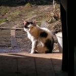 Наш кот Фунтик