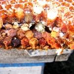 Так пчелы делают пергу