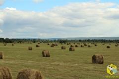 Тюки сена на полях