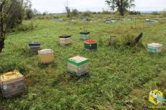 Готовим пчел к переезду