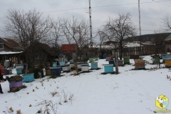 Точок во втором дворе (фото 1)
