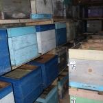 Омшаник в с.Красный Завод (фото 2)