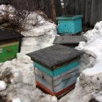 Выставленные пчелиные семьи