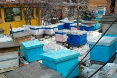 Весна 2011. Выставление пчел