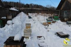Расчищаем снег под улья