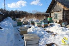 Пчелы занимают свои места
