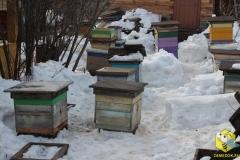 Точок напротив дома наполнился пчелами