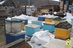 Пчелы на точке