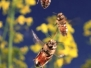 Жизнь пчел