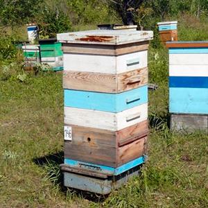 Продажа Среднерусских пчёл в Красноярском крае 2020
