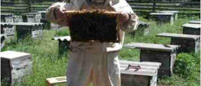 Израиль поднимает пчеловодство в Азербайджане