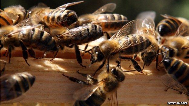 О чем говорят пчелы