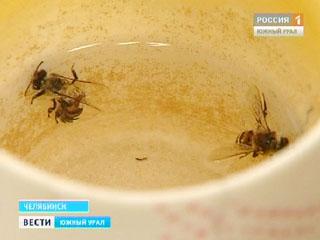Рассеянный склероз лечим пчелиным ядом