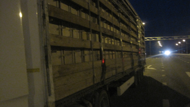 Фуру с пчелопакетами из Казахстана не пустили в РФ