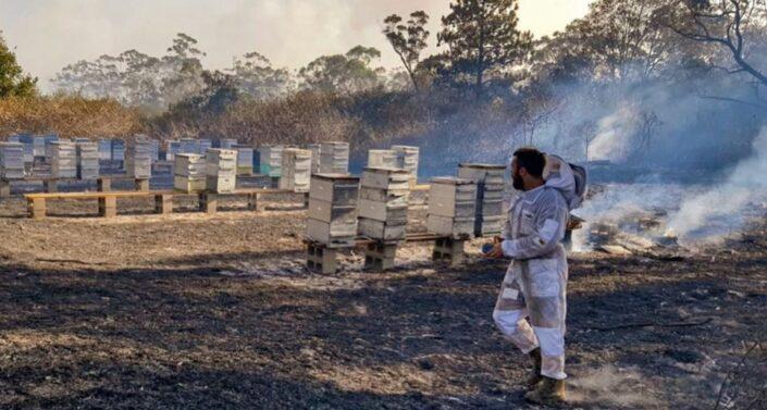 Пожары Австралии
