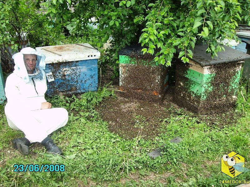 Сибирский мёд - от пасеки до покупателя