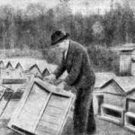 Столяр, он же помощник пчеловода, за поделкой ульев новой конструкции. На заднем плане виден праулей «Сибиряк».