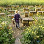 Пчеловодство в Китае