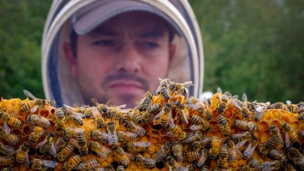 После длительной зимовки 2017 в Канаде погибло много пчёл