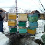 Выставка пчёл, 2019