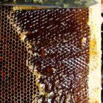 Таёжный мёд