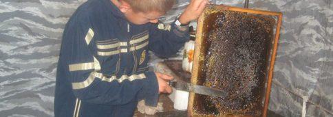 Пчеловоды школьной пасеки