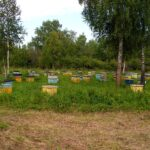 Медосбор закончился. Готовим пчёл к поездке домой