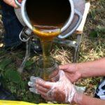 Армянский мёд планируют экспортировать в Европу с 2014 года