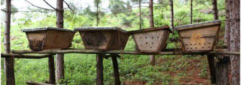 Фото 8. В условиях Уганды деревянные ульи оказываются крайне недолговечными