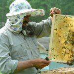 Пчеловод Тюхтетского района