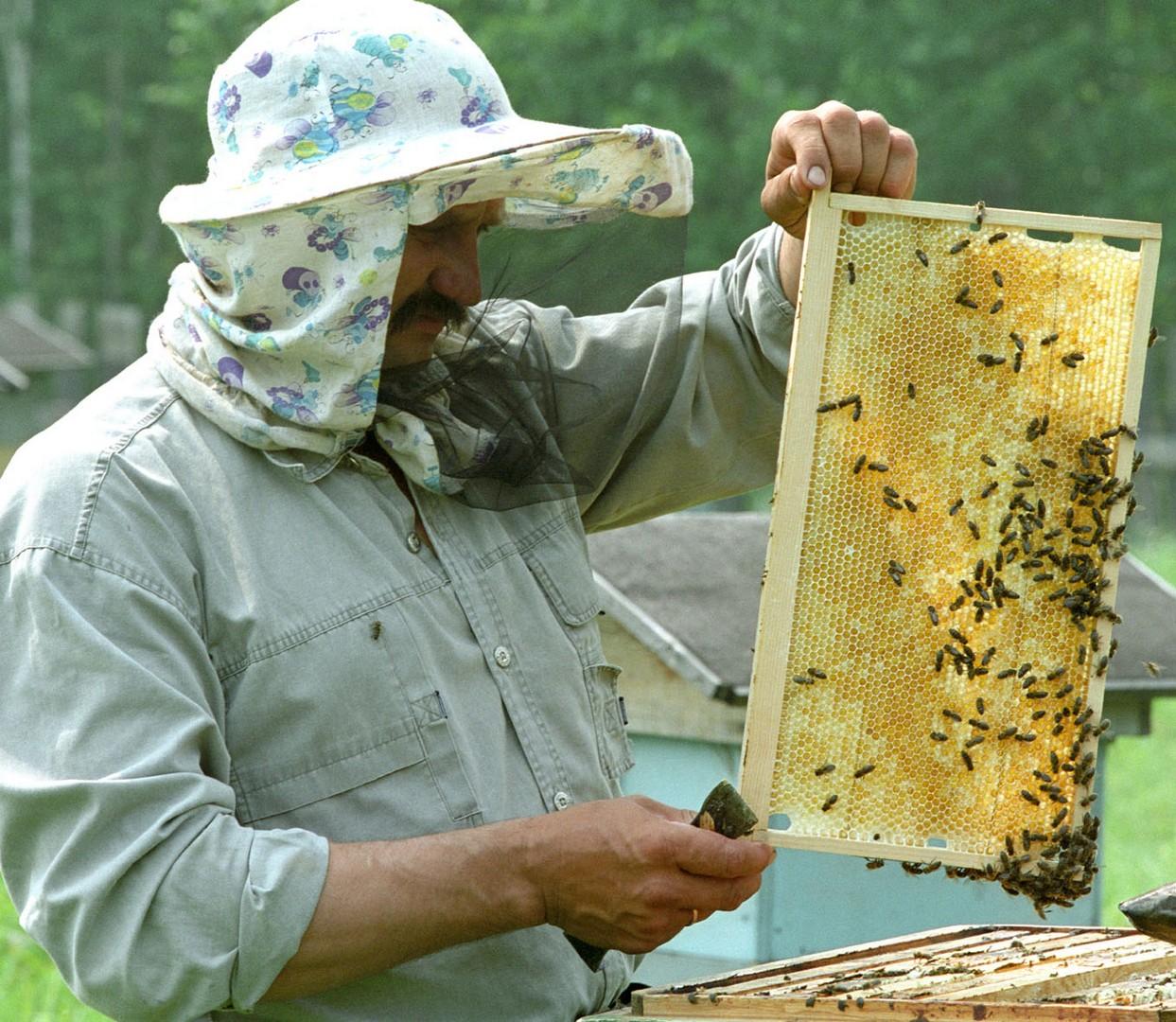 Знаменитый сибирский пчеловод Александр Якищик