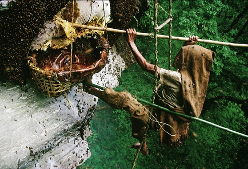 Мёд диких пчел. Вся правда.