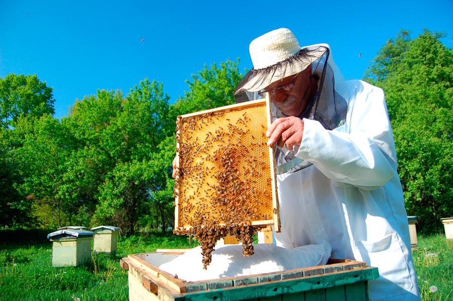 Moku - новый вирус, опасный для пчел