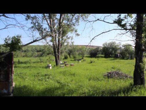 Кочевая пасека на Улово, 2013 год (видео)