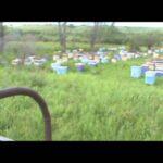 Кочевые пасеки, 2011 год