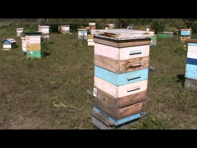 Прогулка по пасеке Старчевских (Видео)