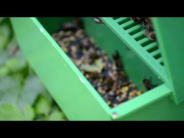Сбор пыльцы. Пыльцеуловитель для пчел (видео)