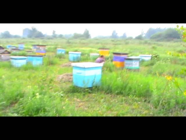 Кочевая пасека Старчевских №2 (Видео)