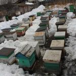 Весна, 2014. Выставили пчел (видео, фото)