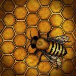 Мобильное приложение BeeScanning для обнаружения клеща Варроа