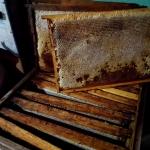 Кормовые соты с мёдом на весну 2020