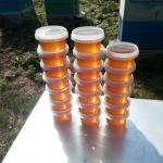 Свежий рапсовый мёд, 21 июля, фото 2