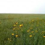 Сорное поле