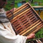 Надставка с секционными мини-рамками под сотовый мёд